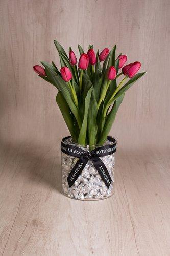 Base circular transparente rellena de 1 kilo de Kisses importados (chocolate de leche) + 10 tulipanes.  Medidas: 17cm x 17cm*Tulipanespodríanpresentar uncolor verdoso los primeros diascomo signo de frescura. Utilizamos botonesrecien cortados para disfrutarel maximo tiempo de vida de estas preciosasflores.*Colores sujetos a disponibilidad. Por favor, elige 2 opciones: