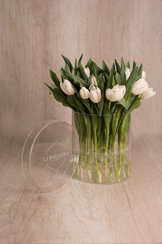 Caja redonda transparante + 25 tulipanes blancos.  Medidas base: 22.5 cm x 16.6 cm  *Tulipanespodríanpresentar uncolor verdoso los primeros diascomo signo de frescura. Utilizamos botonesrecien cortados para disfrutarel maximo tiempo de vida de estas preciosasflores.