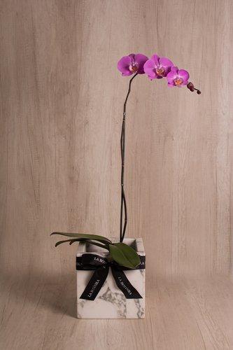 Cubo de mármol blanco + Orquídea grande.  Medida base: 20cm x 20 cm  *Para comprar un color de orquídea específico escríbenos a pedidos@la-botanika.com