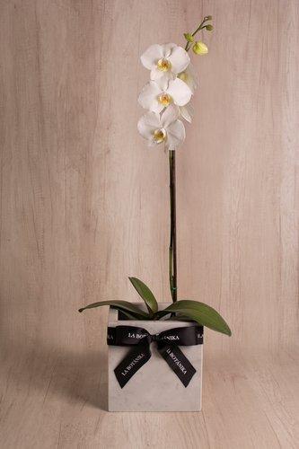 Cubo de mármol gris + Orquídea grande.  Medida base: 20cm x 20 cm  *Para comprar un color de orquídea específico escríbenos a pedidos@la-botanika.com