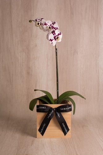Cubo de madera + Orquidea grande. Medida base: 20cm x 20cm.* Para comprar un color de orquidea especíco escribenos a pedidos@la-botanika.com