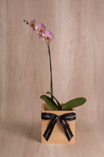 Cubo de madera + Orquídea grande. Medida base: 20cm x 20cm.* Para comprar un color de orquidea especíco escribenos a pedidos@la-botanika.com