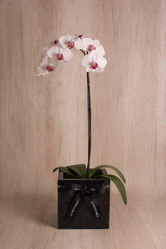 Cubo de mármol + Orquídea grande.  Medidas base: 20cm x 20 cm  *Para comprar un color de orquídea en específico escríbenos a pedidos@la-botanika.com