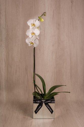 Cubo revestido de espejo + Orquídea grande.  Medida base: 17cm x 17cm  *Para comprar un color de orquidea específico escribenos a pedidos@la-botanika.com