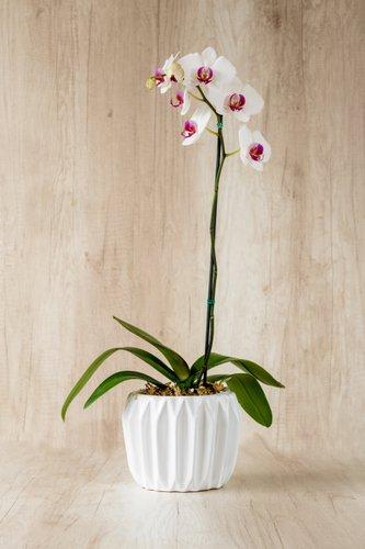 Porta maceta de cerámica + Orquidea grande (color de centro fucsia podría cambiar a centro amarillo). Medida base:16cm x 16cm  * Para comprar un color de orquidea especíco escribenos a pedidos@la-botanika.com