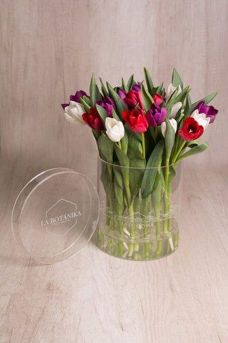 Caja redonda transparente + 25 Tulipanes.  Medida base: 22.5cm x 16.6cm  *Tulipanespodríanpresentar uncolor verdoso los primeros diascomo signo de frescura. Utilizamos botonesrecien cortados para disfrutarel maximo tiempo de vida de estas preciosasflores.
