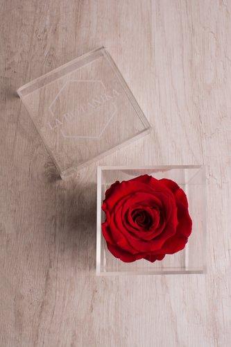 Caja transparente + Rosa preservada.  Medidas: 10cm x 10cm.