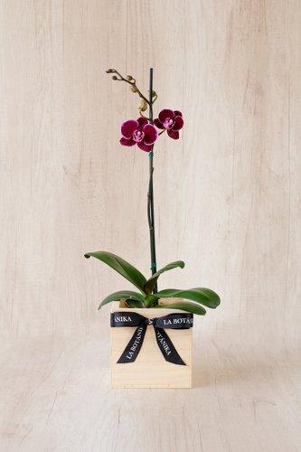 Cubo de madera + Orquidea pequeña.  Medida base: 14cm x 14cm.  * Para comprar un color de orquidea especíco escribenos a pedidos@la-botanika.com