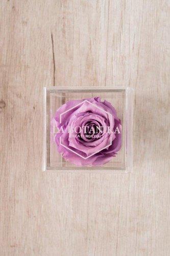 Caja transparente + Rosa preservada rosada.  Medidas: 10cm x 10cm.