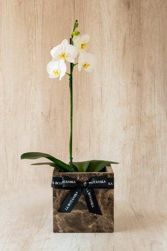 Cubo de mármol marrón+ Orquídea grande.  Medida base: 20cm x 20 cm  *Para comprar un color de orquídea específico escríbenos a pedidos@la-botanika.com