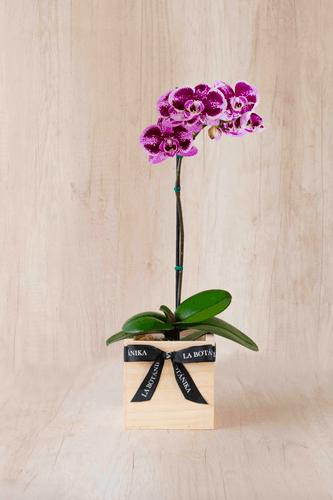 Cubo de madera + Orquidea pequeña en tonos lilas ó morados (Foto referencial)  Medida base: 14cm x 14cm.  * Para comprar un color de orquidea especíco escribenos a pedidos@la-botanika.com