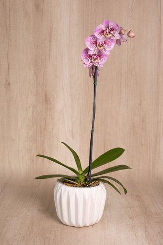 Porta maceta de cerámica + Orquídea grande. Medida base:16cm x 16cm  * Para comprar un color de orquidea especíco escribenos a pedidos@la-botanika.com