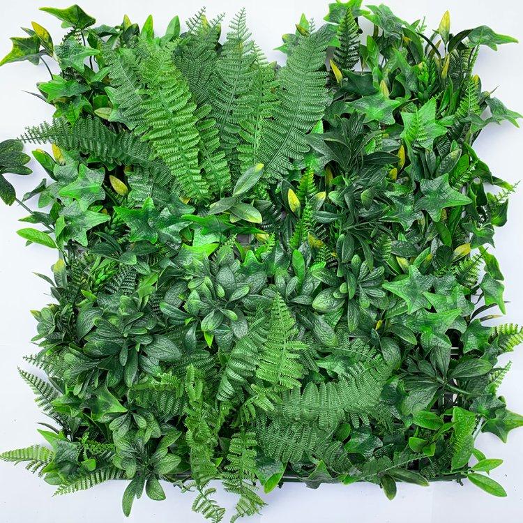 Su follaje exótico- tupido y variado con diferentes tonalidades de verde- dará contraste y volumen al espacio donde elijas ponerlo.  Ideal para utilizar en espacios de interior y exterior.