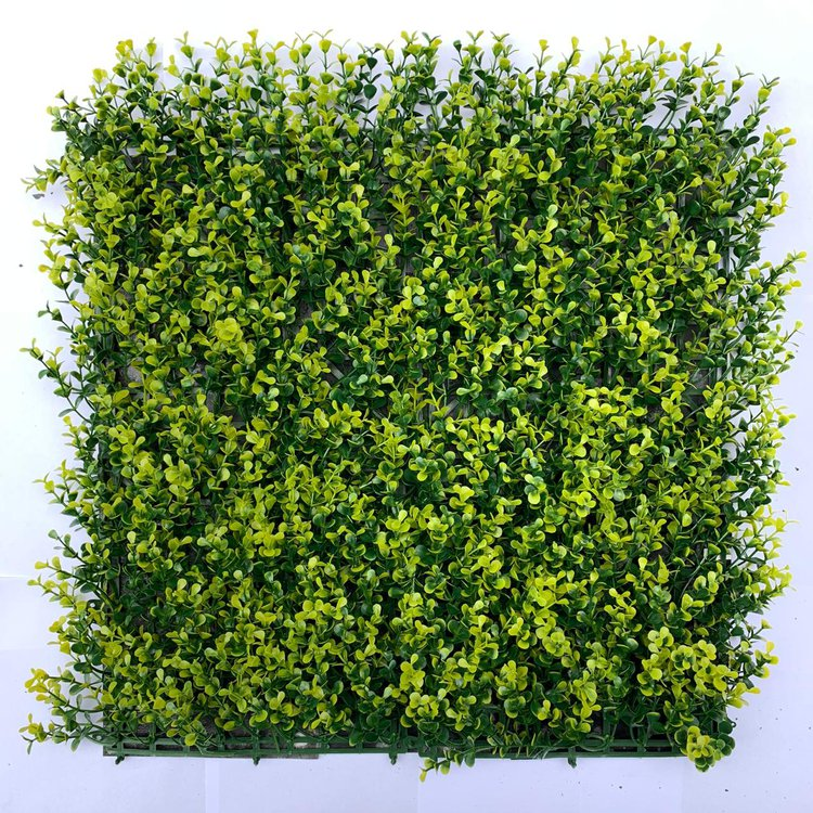 Sus pequeñas hojas en 2 tonalidades (verde oscuro y verde olivo) hacen de este follaje uno de los mas gustados. Puede aplicarse en cualquier espacio que requiera aumentar la luminosidad y darle vida.  Ideal para aplicarse en espacios de interior y exterior.